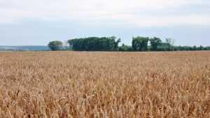Брянщина отправила за границу более 470 тысяч тонн зерна