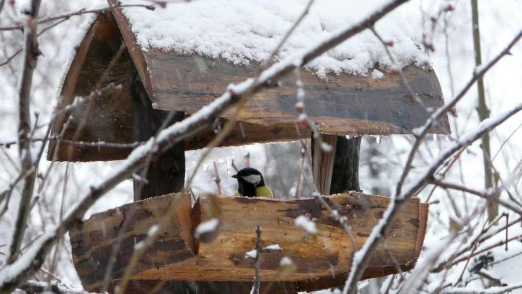В Брянской области стартовала акция «Хранители птиц»