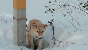 Жители Клинцов спасли от гибели привязанную живодером к столбу собаку