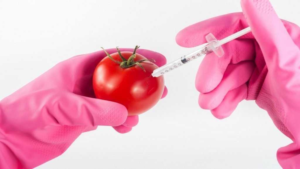 Ученые оценили влияние ГМО на организм человека