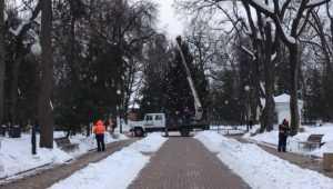 В Брянске главную новогоднюю ёлку убрали из Круглого сквера
