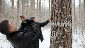 Брянские леса пополнили бюджет области и страны на 425 млн рублей