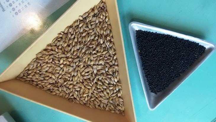 Брянские крестьяне начали подготовку к весеннему севу