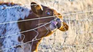 «Мираторг» заявил, что их заборы диким животным на Брянщине не вредят