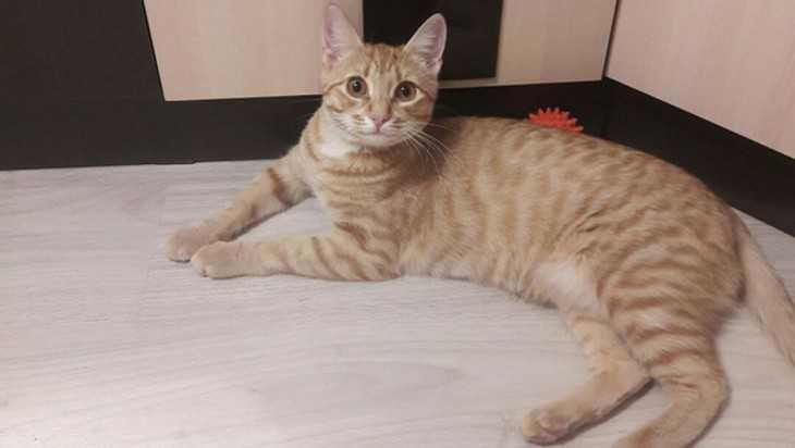 В Брянске на выставке бесплатно раздадут кошек