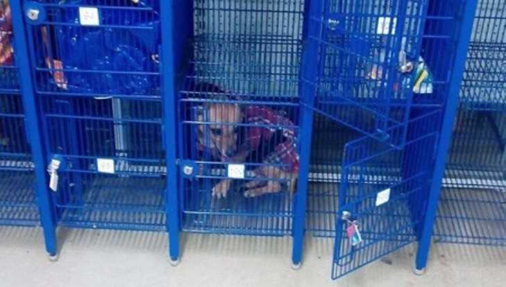 Брянцев поразила запертая в камере хранения супермаркета собака