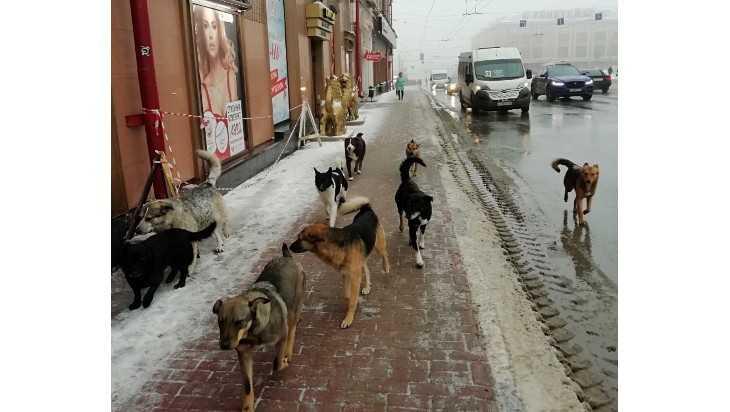 Стая чудных бродячих собак окружила администрацию Брянска