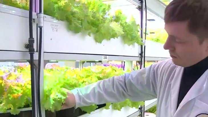 В Дятькове стали выращивать в воде салат с йодом и селеном