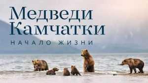 В брянской библиотеке покажут фильм Шпиленка о медведях Камчатки