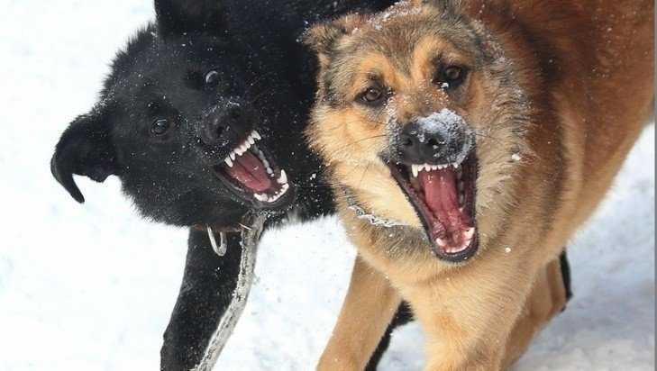 В Брянске двор на улице Мичурина захватили 26 бродячих собак