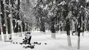 В Брянской области 12 февраля ночной мороз сменится 3-градусным теплом
