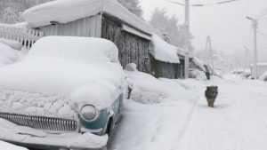 Дубровских чиновников заставили убирать снег с улиц