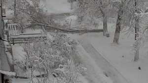 В Брянске после снегопада начали падать деревья