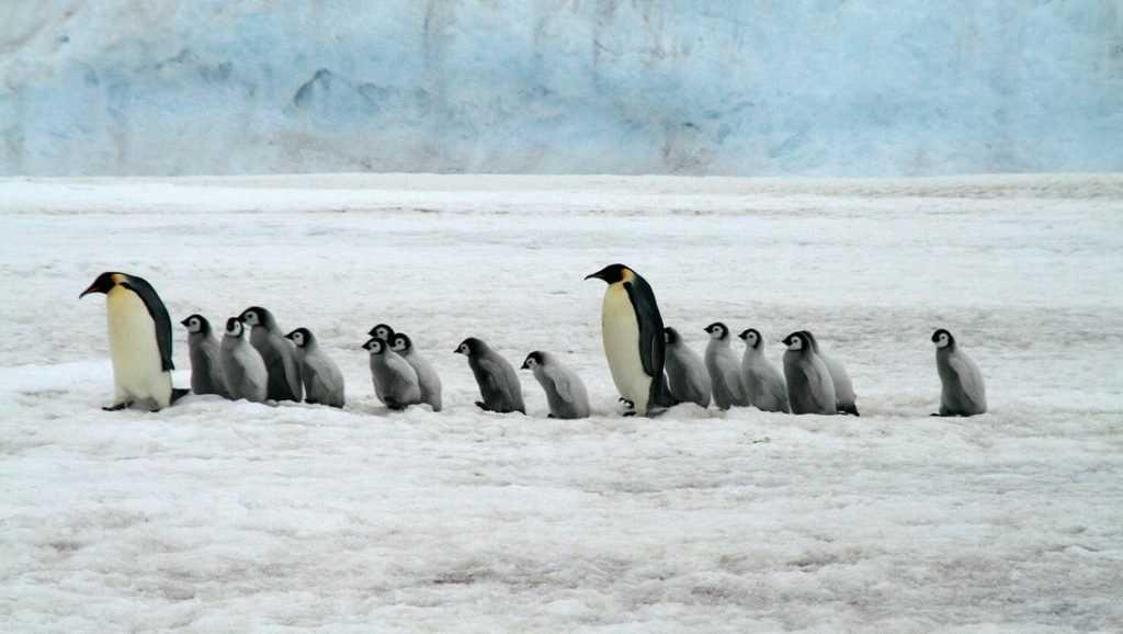 Ученые впервые обнаружили бактерии в Антарктиде