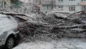 С улиц Брянска убрали упавшие во время снегопада деревья