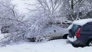 В Брянске под тяжестью снега дерево рухнуло на автомобили