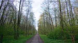 Жители Брянска попросили привести в порядок «Заставище» в Бежице