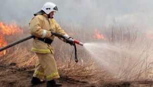 Брянские спасатели за сутки 50 раз тушили горевшую траву