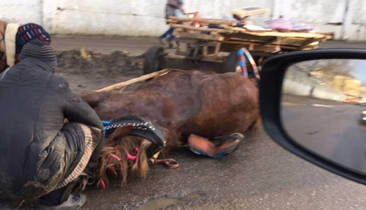 В Брянске автомобиль врезался в лошадь ехавших на повозке цыган