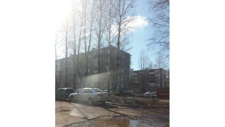 Брянцы попросили городские власти избавить их от аварийных деревьев