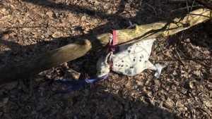 В Брянске живодеры жутким способом умертвили собаку