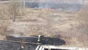 В брянском микрорайоне Отрадное шариковы подожгли сухую траву