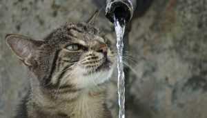 В Володарском районе Брянска на сутки понизят напор воды