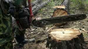Черный лесоруб из Дубровки предстанет перед судом