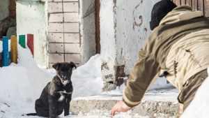 Отлов бродячих собак возле брянского мясокомбината потерпел неудачу