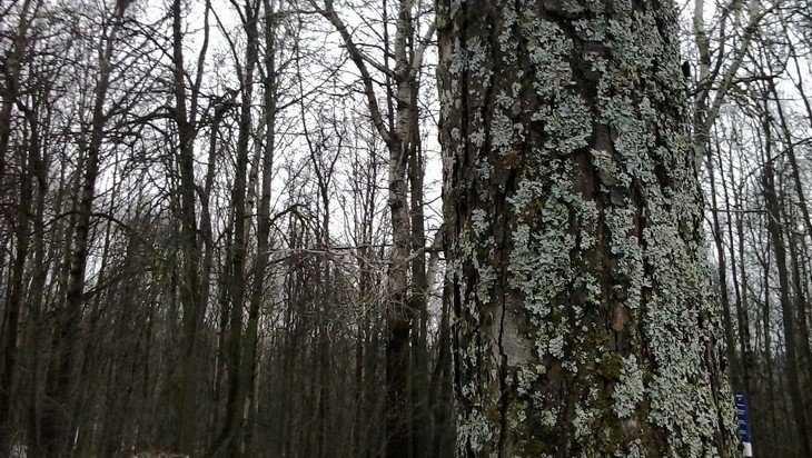 В брянском парке «Соловьи» начали выпиливать деревья