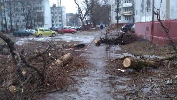 Жители дома в Брянске пожаловались на заваленный деревьями тротуар
