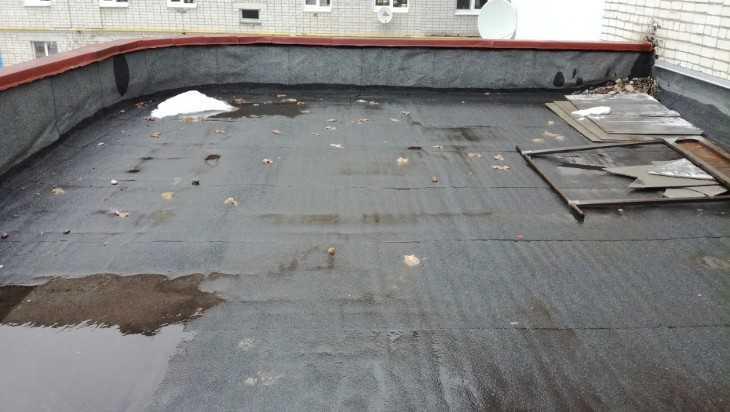 Крыша магазина в Белых Берегах стала местом выгула собак и кошек