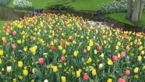 Брянск перед 8 марта на четыре дня превратят в цветочный город