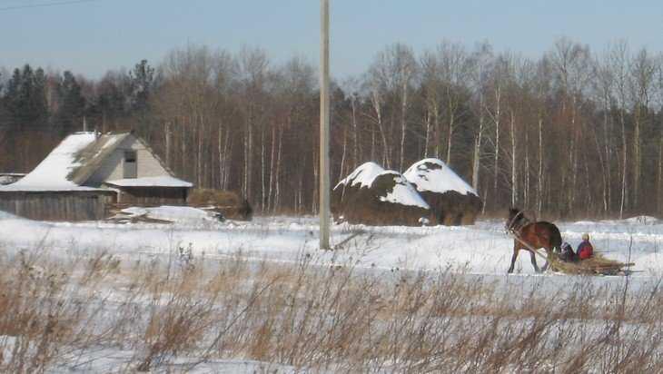 В Брянскую область пришла весна – потеплеет до 10 градусов