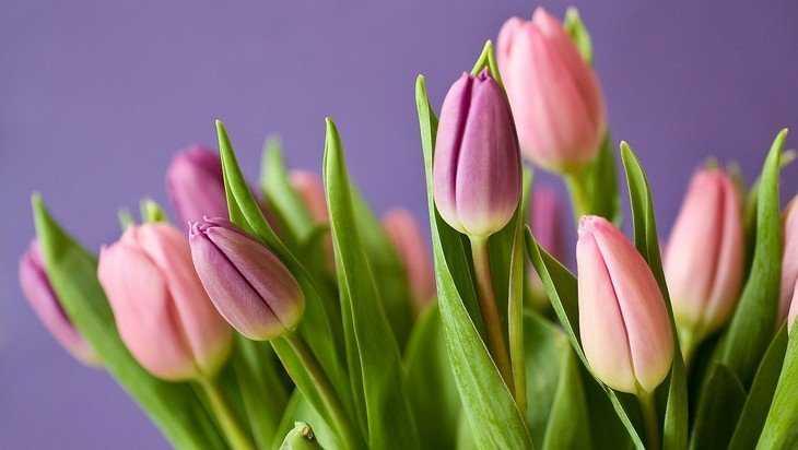 В Брянской области уничтожили перед 8 Марта более 3400 тюльпанов