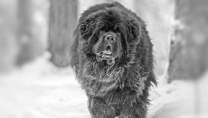 Покусанного псом брянского юношу наказали хождением по врачебным мукам