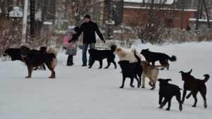 В Брянске район мясокомбината захватила стая злых бродячих собак