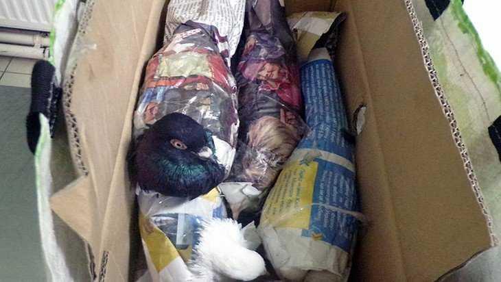 Брянские таможенники перехватили четырех голубей из Украины