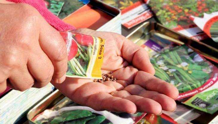 Брянский гипермаркет наказали за незаконную продажу семян