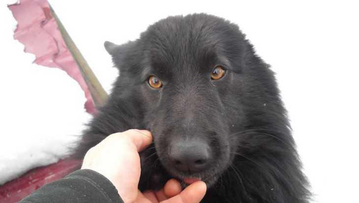 В Новозыбкове таксист покалечил лежавшую на тротуаре собаку