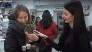 В Брянске семи бездомным кошкам нашли новых хозяев