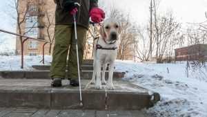 Инвалид добился у брянских чиновников компенсации на собаку-поводыря