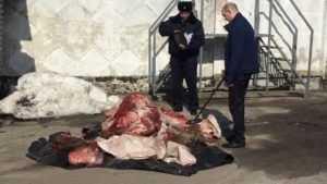 В Суражском районе поймали четверку браконьеров с тушей лося