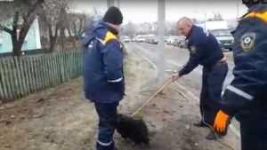 В Брянске сняли видео спасения застрявшей в трубе собаки