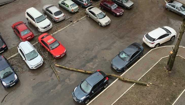 В Брянске на автомобили рухнуло поваленное ветром дерево