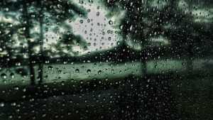 Ураганный ветер оставил жителей Брянской области без света