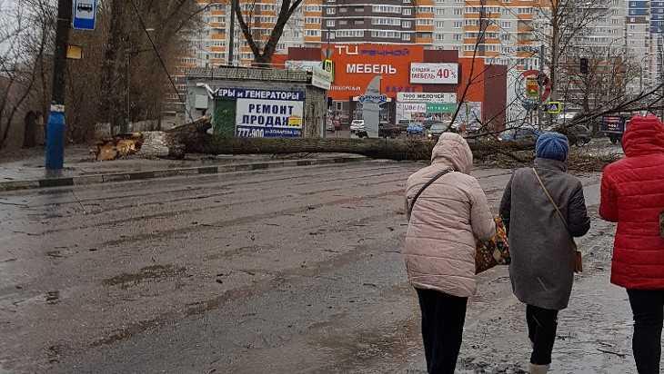 В Брянске возле «Речного» большое дерево рухнуло на дорогу