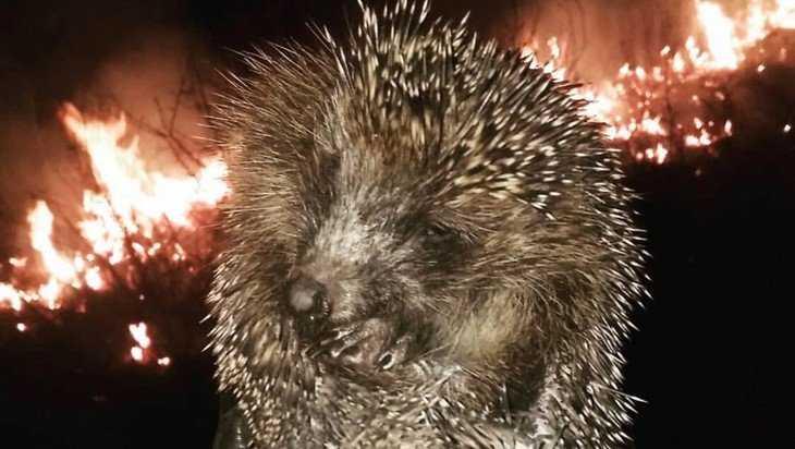 Житель Брянска спас оказавшегося в горящей траве ежа