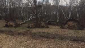 В брянском лесу очевидцы увидели «страшную картину»