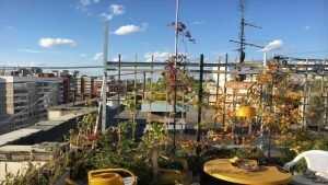 Коммунальщики безжалостно разрушили цветущий сад 82-летнего старика